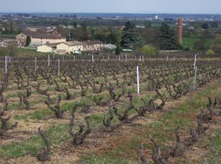 Vignoble du Château du Prieuré